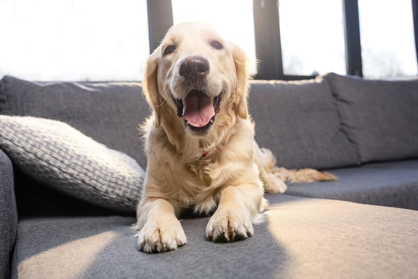 Custom Dog Kennels That Look Like Furniture for Ramona, Poway, San Diego Homes